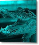 Baby Gator Turquoise Metal Print