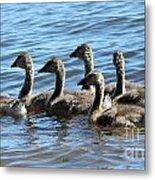 Baby Geese Metal Print