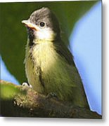 Baby Coal Tit Metal Print
