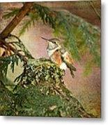 Baby Hummingbird In The Forest Metal Print