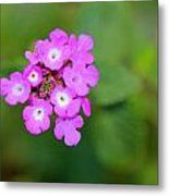 Flower - Baby In Pink Metal Print