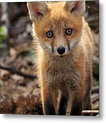 Baby In The Wild Metal Print