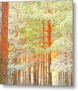 Baby Its Cold Outside But The Trees Don't Freeze  Metal Print