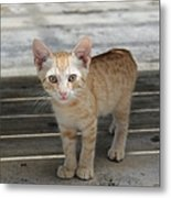 Baby Kitty Metal Print