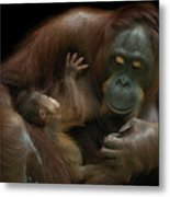 Baby Orangutan & Mother Metal Print