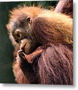 Baby Orangutan Borneo Metal Print