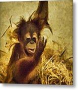 Baby Orangutan At The Denver Zoo Metal Print