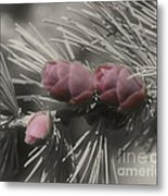 Baby Pine Cones In Partial Color Metal Print