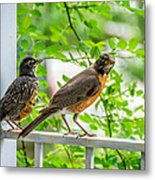 Baby Robin - Ready...just Do What I Do Metal Print