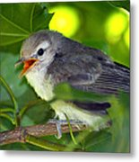Baby Sparrow In The Maple Tree Metal Print