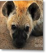 Baby Spotted Hyena Metal Print