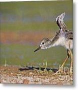 Baby Stilt Stretching Its Wings Metal Print