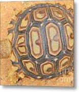 Baby Tortoise Metal Print