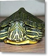Baby Turtle Straight On Metal Print