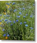 Bachelor's Meadow Metal Print