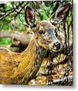 Back-tail Doe Metal Print