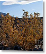 Backlit Desert Foliage Metal Print