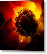 Backlit Flower Metal Print by Fabrizio Troiani