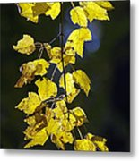 Backlit Leaves Of Autumn Metal Print