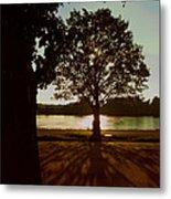 Backlit Tree Metal Print