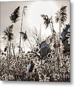 Backlit Winter Reeds Metal Print
