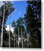 Backroad Aspens Metal Print by Carrie Putz