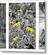 Backwoods Escape Triptych Metal Print