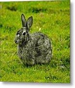 Backyard Bunny In Black White And Green Metal Print