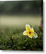 Backyard Flower Metal Print by Jason Bartimus