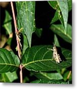 Backyard Hopper Metal Print