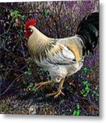 Backyard Rooster Metal Print