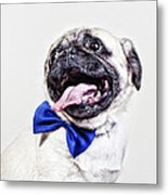 Bacon The Pug Metal Print