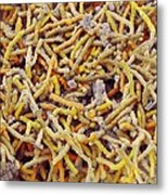 Bacteria In Bird Droppings, Sem Metal Print by Science Photo Library
