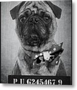 Bad Dog Metal Print