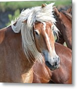Bad Hair Day 8024 Metal Print