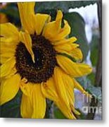 Bad Petal Day  Metal Print
