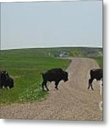 Badlands Buffalo Metal Print