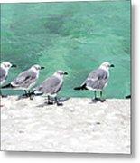 Bahama Birds Metal Print