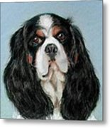 Bailey The Cavalier King Charles Spaniel Metal Print