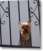Balcony Dog Metal Print