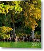 Bald Cypress Trees 1 - Digital Effect Metal Print