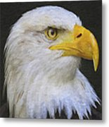 Bald Eagle 2 Metal Print