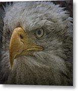 Bald Eagle 26 Metal Print