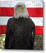 Bald Eagle 265 Metal Print by Joyce StJames