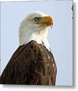 Bald Eagle-a Metal Print