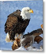 Bald Eagle And Carcass Metal Print