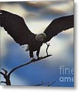 Bald Eagle And Clouds Metal Print