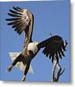 Bald Eagle Ascent 3 Metal Print