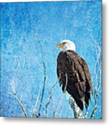 Bald Eagle Blues Metal Print
