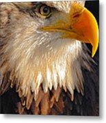 Bald Eagle Close-up Metal Print